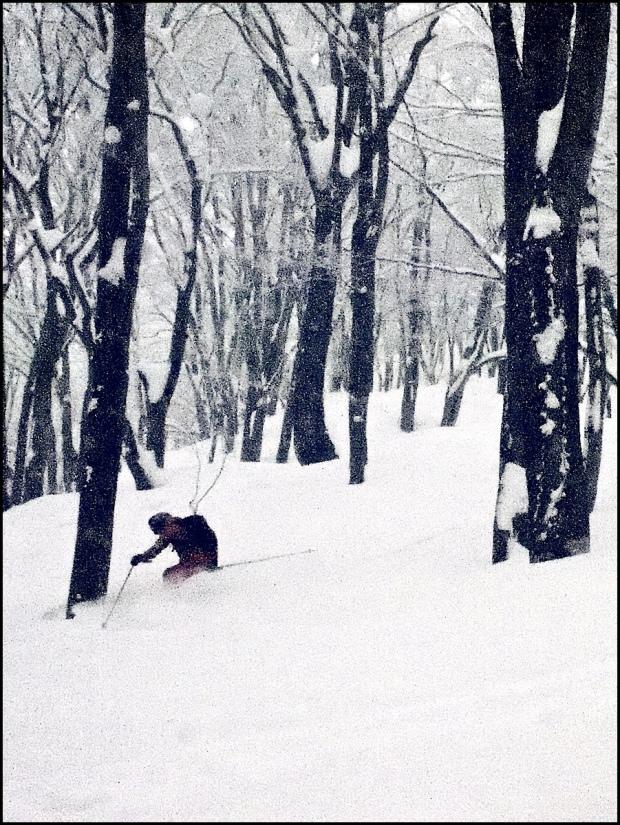 James tearing up the Cortina trees